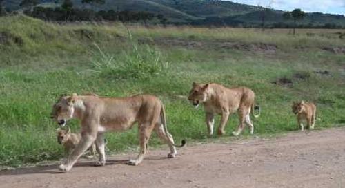 Masai Mara morning nursery