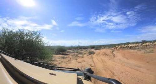 360 degree - Samburu herders with camels