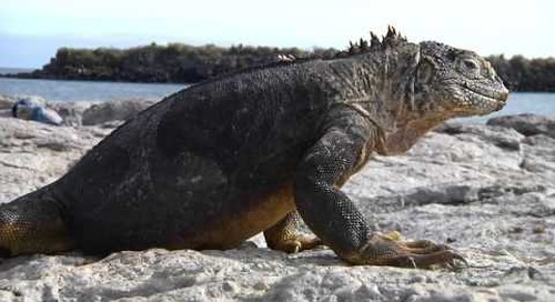 Explore Galapagos on a family cruise with IE!