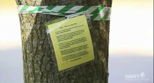 Managing EAB in Your Community: You Have Options!