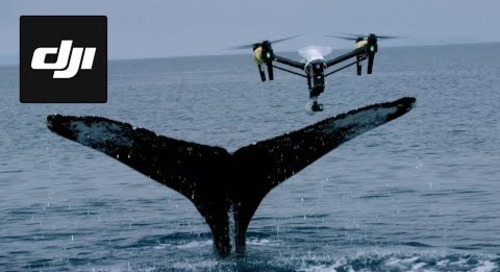 DJI Stories - Snotbot: Pushing the Frontiers of Whale Research