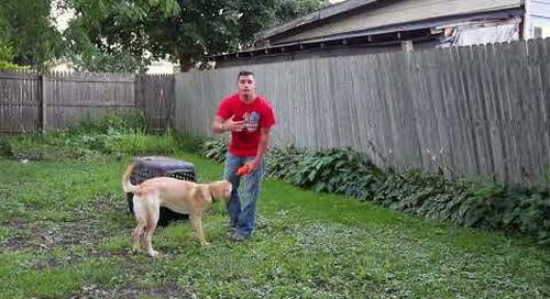 Dog Training - Hide Command