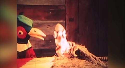 How To Raise Pheasants