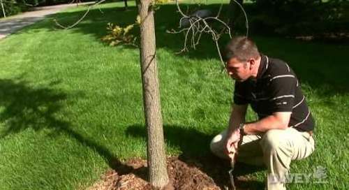 How to Plant Your Tree at the Proper Depth