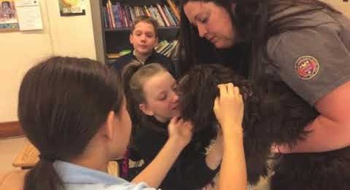 The Therapy Dog Program