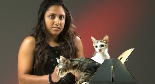People Who Hate Cats Meet Kittens
