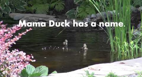 Mama Duck has a name!