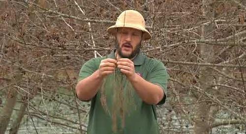 Steele Creek Explorer - Tree Planting