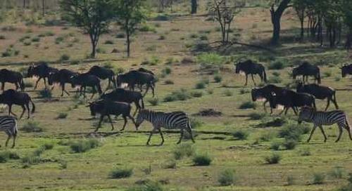 Serengeti in a Nutshell