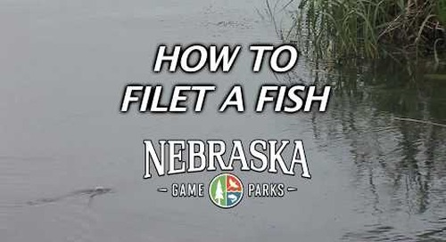 How To Fillet A Fish with Daryl Bauer