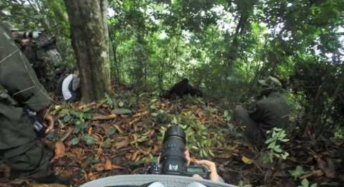 Uganda - Gorilla Trek 360º - family play