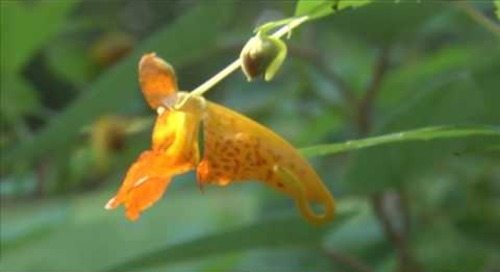 Steele Creek Explorer - Fall Flowers