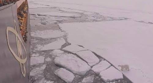 North Pole: Marine Biologist & Geologist Liz Teague talks Polar Bears (360° VR)