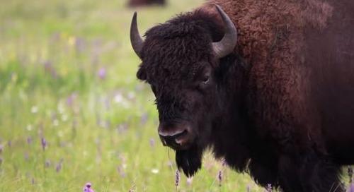 Surprising Discoveries of Manitoba