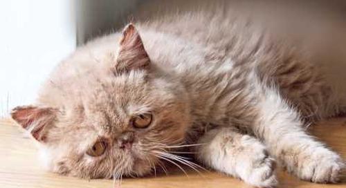 Sad Cat Diary