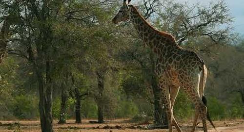 African Safari Destination South Africa