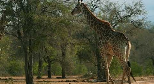 African Safari Destination South Africa