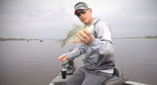 Wolf River White Bass Action on Fly Rigs!