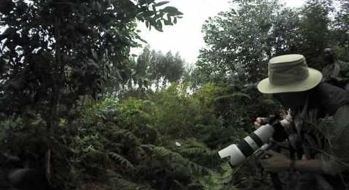 Rwanda - Gorilla Trek 360º -  finding the silverback