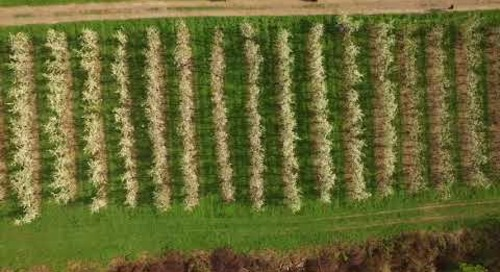 Drone pollinates Central New York apple orchard