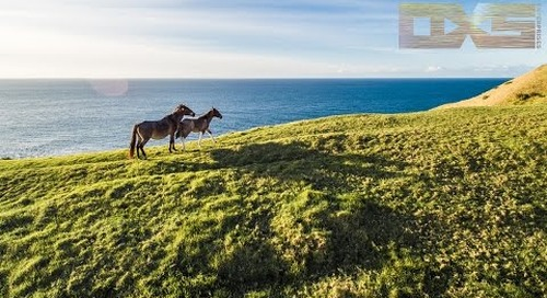 The Wild Horses Of Spirits Bay New Zealand - A Drones Perspective 4K