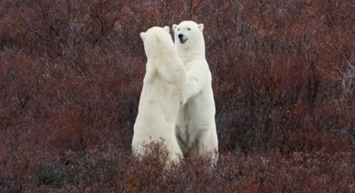 Manitoba: Lonely Planet 2019 Best in Travel