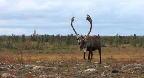 Manitoba Big Game Hunting