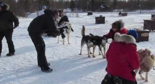 Dog sledding in Churchill