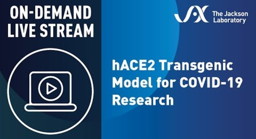 hACE2 Transgenic Model For COVID-19 Research