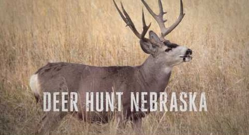 Deer Hunt Nebraska