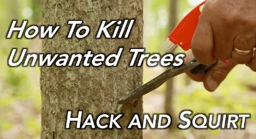 How To Kill a Tree   Hack and Squirt