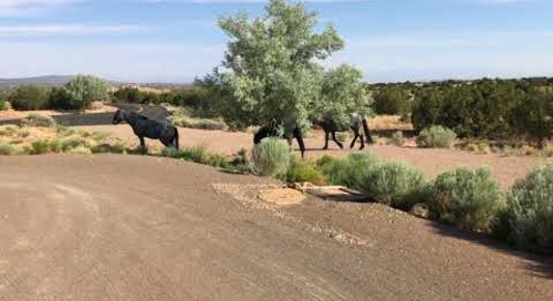San Pedro Overlook Wild Horses
