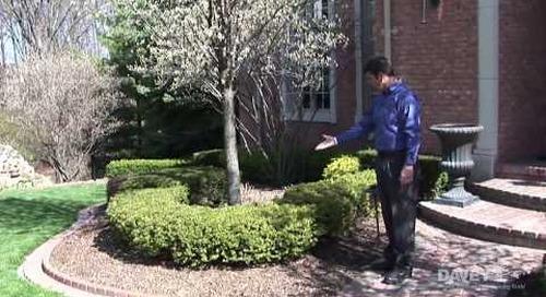 Spring Tree Inspection