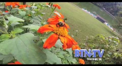 Bumble Bee ID