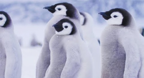 Small Actions Make Big Differences: Protecting the Polar Regions