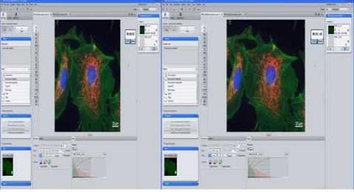 ZEISS  ZEN 2.3: Working with 3D Deconvolution (CPU DCV)