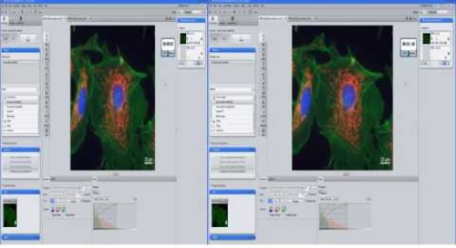 ZEISS  ZEN 2.3: Working with 3D Deconvolution (CPU DCV)