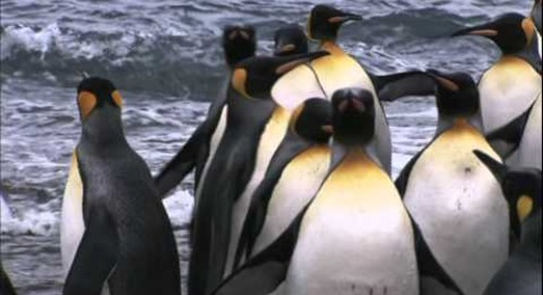 The King Family: Adventures in Antarctica