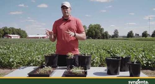 Gérer les mauvaises herbes résistantes au glyphosate