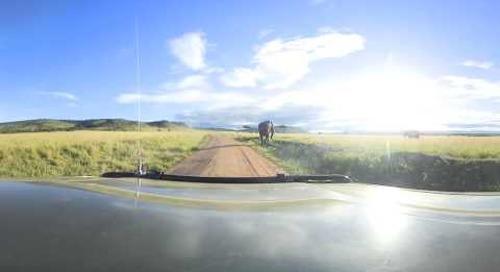 360 degree - On game drive in the Masai Mara ...  elephant