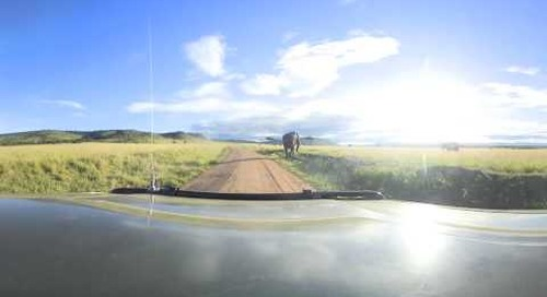 360 degree - On game drive in the Masai Mara ...  elephant