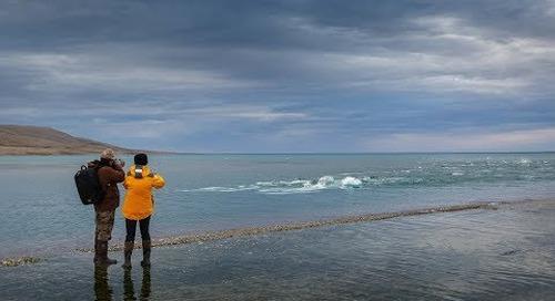 Travel to the Arctic: The Ultimate Wildlife Safari