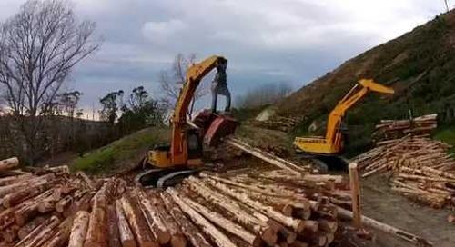 Titirangi Restoration Project Part 2: Tree to Sea