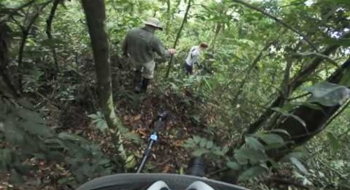 Uganda - Gorilla Trek 360º - finding the gorillas