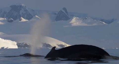 Preserving the Polar Regions