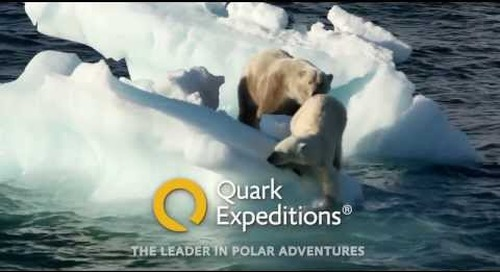 Polar bears on the ice