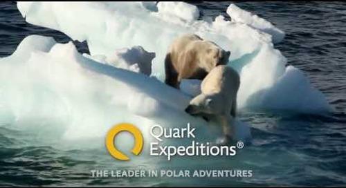 Polar bears on the ice