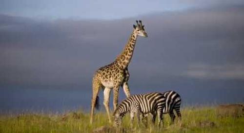 Marvelous Kenya