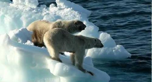 Polar Big 5 Animal Outtakes