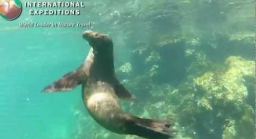 Snorkeling in the Galapagos Islands With Sea Lions